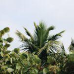De Agave plant aanschaffen als uniek exemplaar